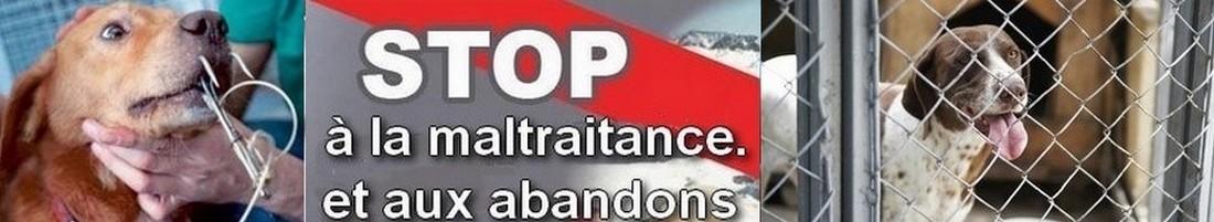 Stop maltraitance 1